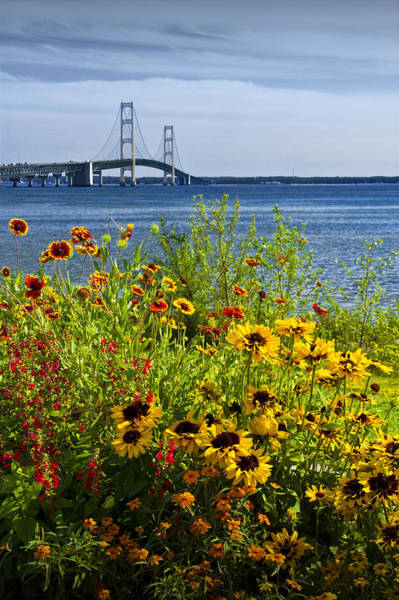 Blooming Flowers By The Bridge At The Straits Of Mackinac Poster