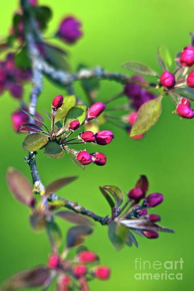 Blooming Spring Poetry Poster