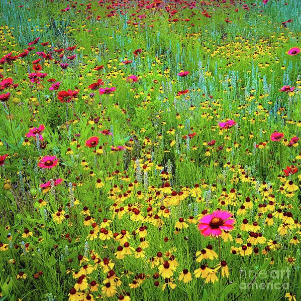 Blooming Wildflowers Poster