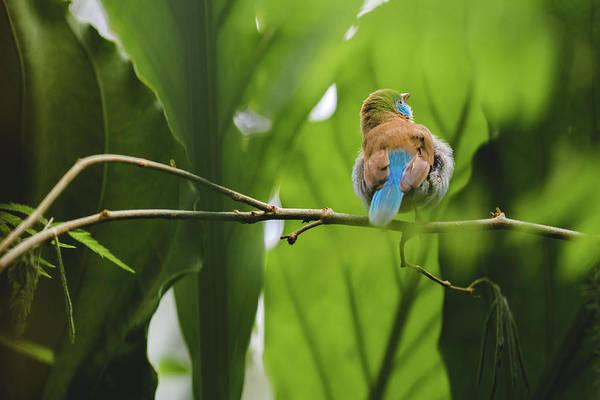 Blue Bird Has An Itch Poster