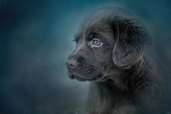 Blue Eyed Puppy Poster