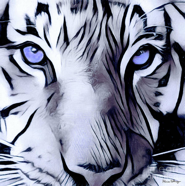 Blue Eyed Tiger Poster