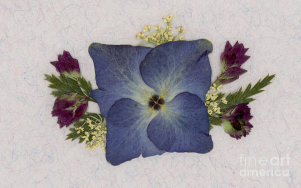 Blue Hydrangea Pressed Floral Design Poster