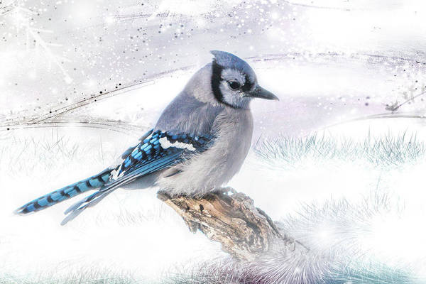 Poster featuring the photograph Blue Jay Snow by Patti Deters