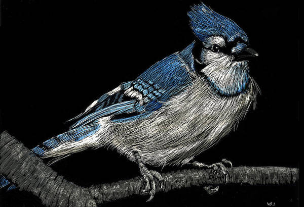 Bluejay Poster