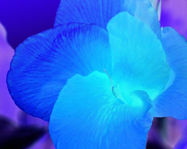 Blurple Flower Poster