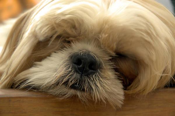 Bogie Asleep Poster