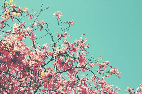 Boho Cherry Blossom 1- Art By Linda Woods Poster