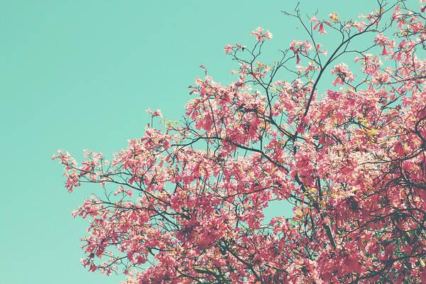 Boho Cherry Blossom 2- Art By Linda Woods Poster