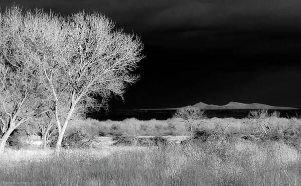 Bosque Del Apache - Infrared Poster