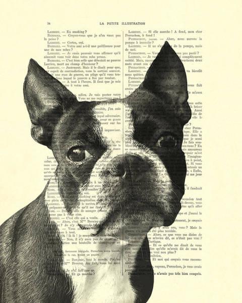 Boston Terrier Portrait In Black And White Poster