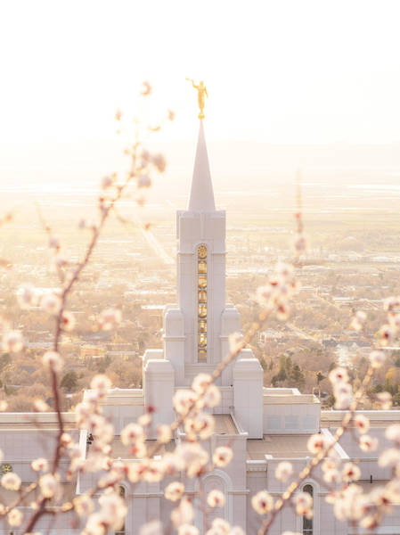 Bountiful Temple Blooms Poster