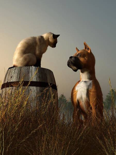 Boxer And Siamese Poster