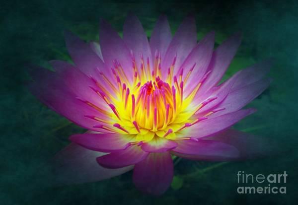 Brightly Glowing Lotus Flower Poster