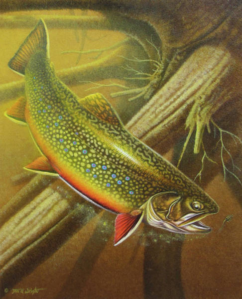 Brook Trout Cover Poster