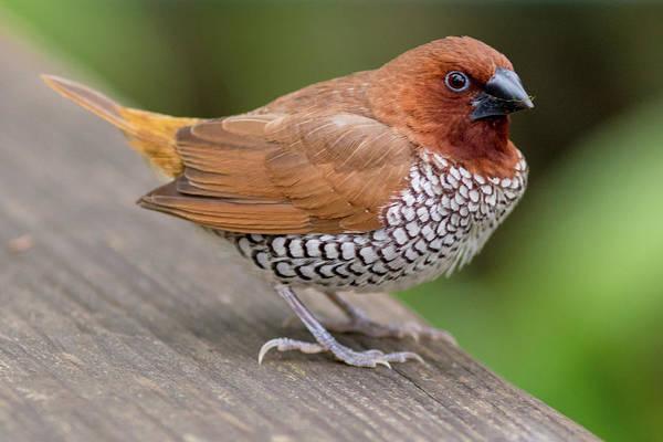 Brown Bird Poster