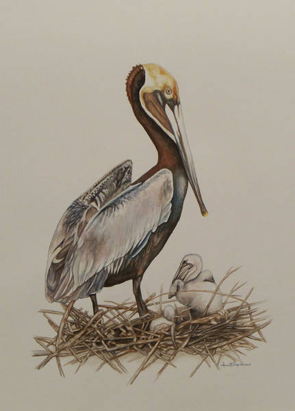 Brown Pelican And Chicks Poster