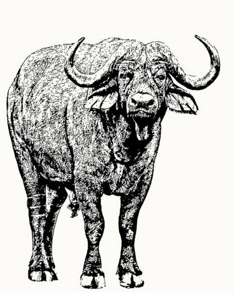 Buffalo Bull, Full Figure Poster
