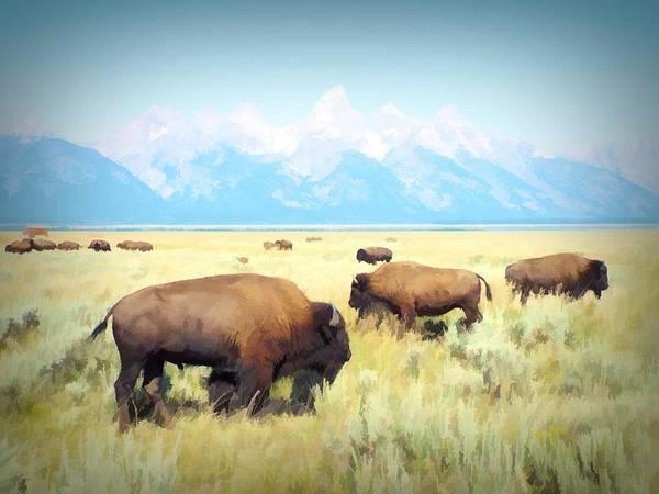 Buffalo Roam, Smokey Grand Tetons, Wyoming Poster