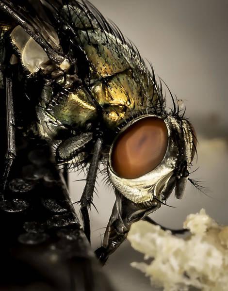 Bug On A Bug Poster