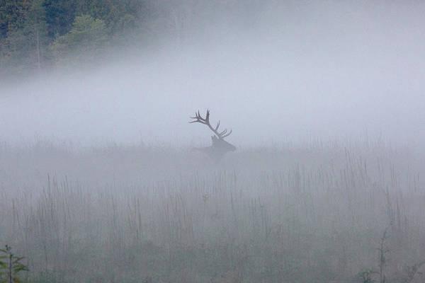 Bull Elk In Fog - September 30, 2016 Poster