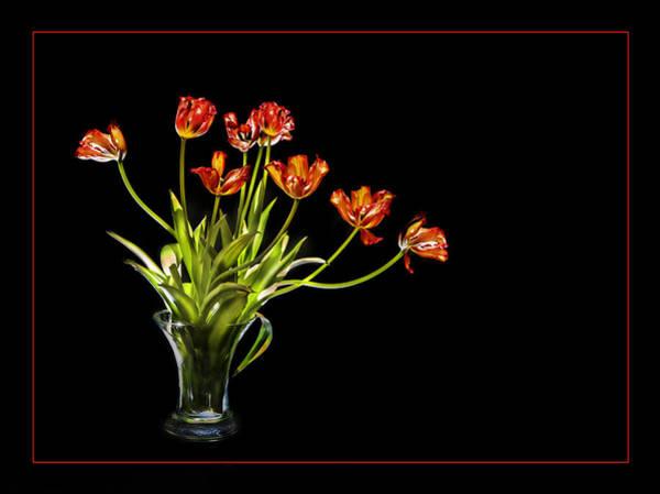 Burnt Orange Tulips Poster