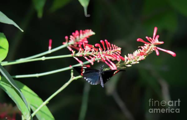 Butterfly In Flight Poster