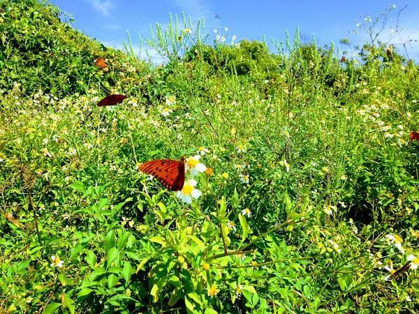 Butterfly Bonanza Poster