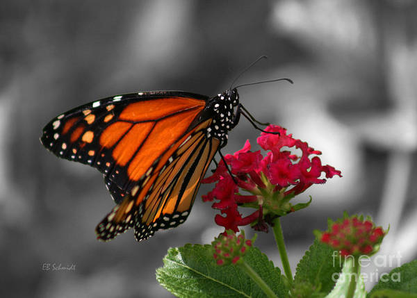 Butterfly Garden 01 - Monarch Poster