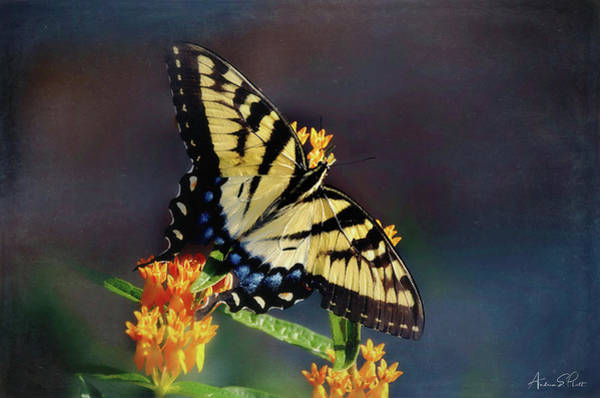 Poster featuring the photograph Butterfly Landing by Andrea Platt