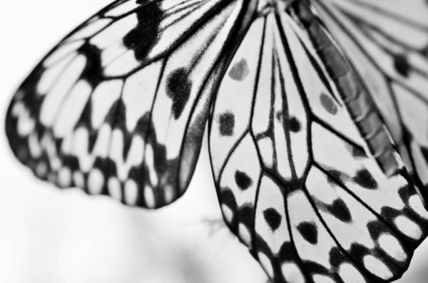 Butterfly Wings 3 - Black And White Poster