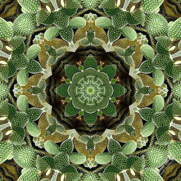 Cactus 1361k8 Poster
