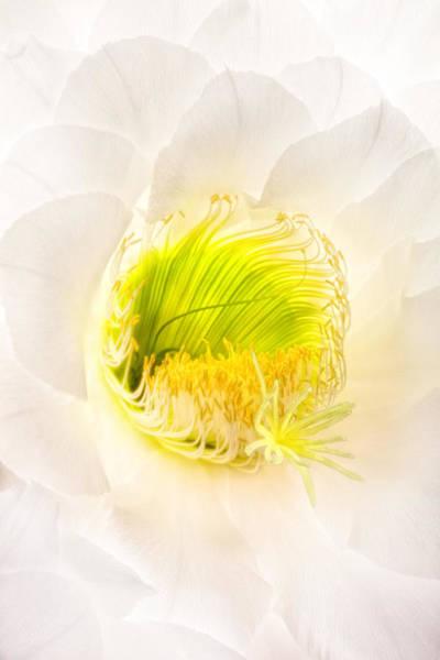 Cactus Bloom Number Five Poster