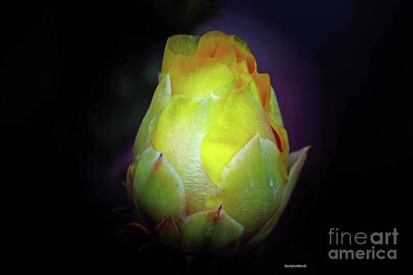Cactus Flower 7 Poster