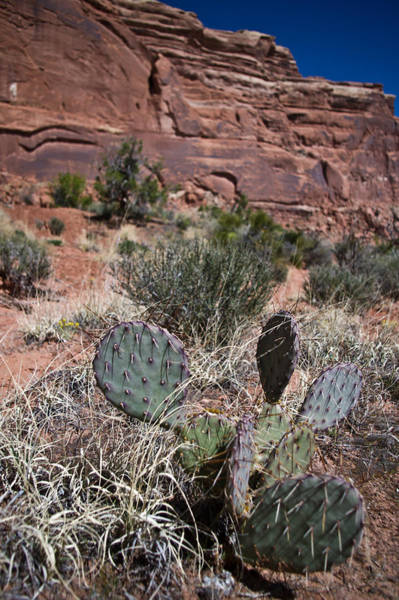 Cactus In Arches Nat'l Park Poster