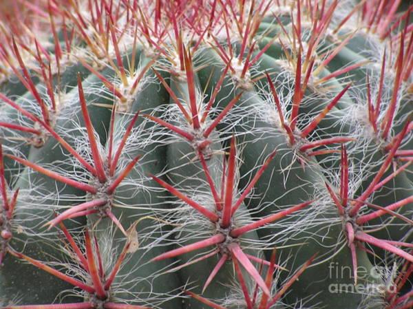Cactus01 Poster