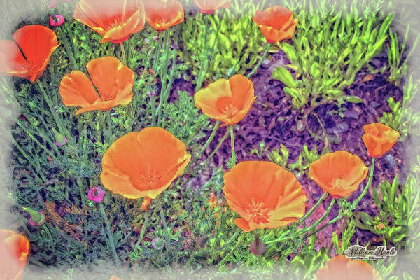 Poster featuring the photograph California Poppys Too by William Havle