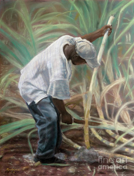 Cane Field Poster