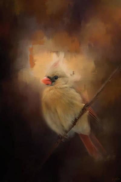 Cardinal In The Evening Light Bird Art Poster