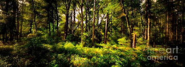 Carolina Forest Poster