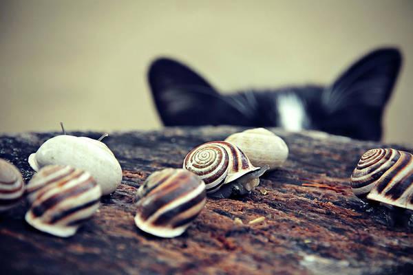Cat Snails Poster