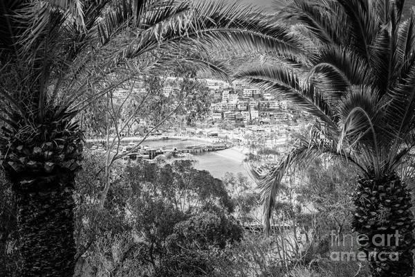 Catalina Island Through Palm Trees Poster