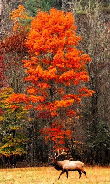 Cataloochee Color Poster