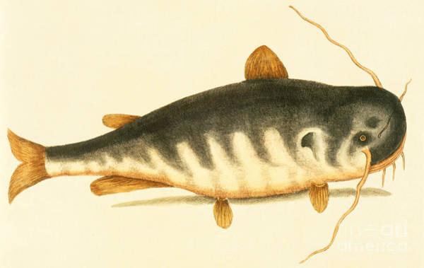 Catfish Poster