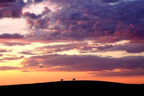 Cattle Ridge Sunset Poster