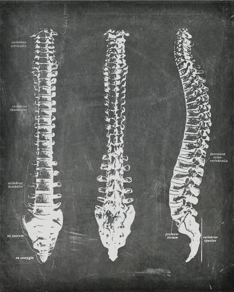 Chalkboard Anatomical Spines Poster