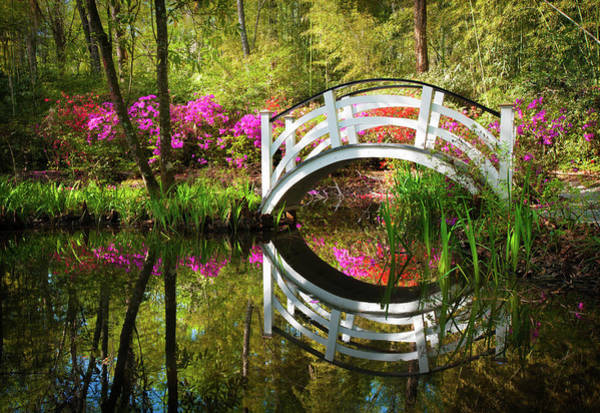 Charleston Sc Magnolia Plantation Spring Blooming Azalea Flowers Garden Poster