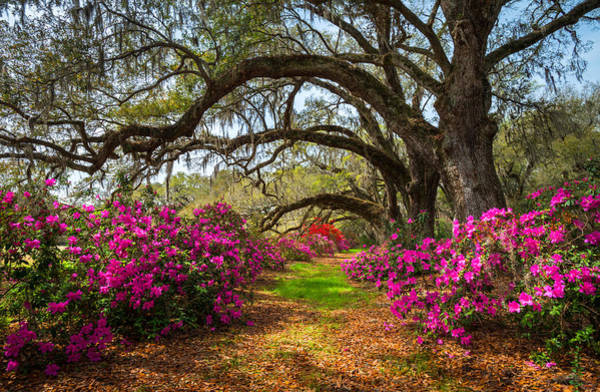 Charleston Sc Spring Flowers Scenic Landscape South Carolina  Poster
