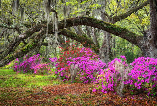 Charleston South Carolina Spring Flowers Lowcountry Landscape Photography Poster