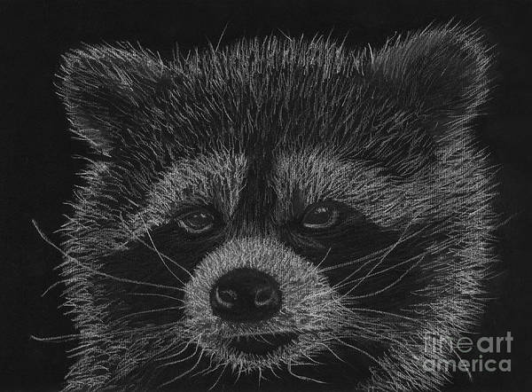 Cheeky Little Guy - Racoon Pastel Drawing Poster